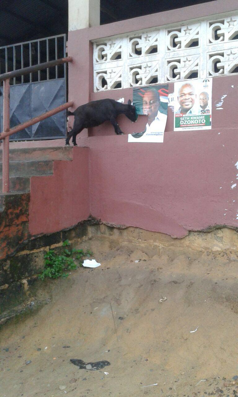 Goat Destroying Mahama poster